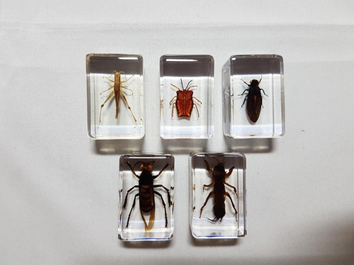 Echte Insekten, Sammler-Set Präparate in Kunstharz