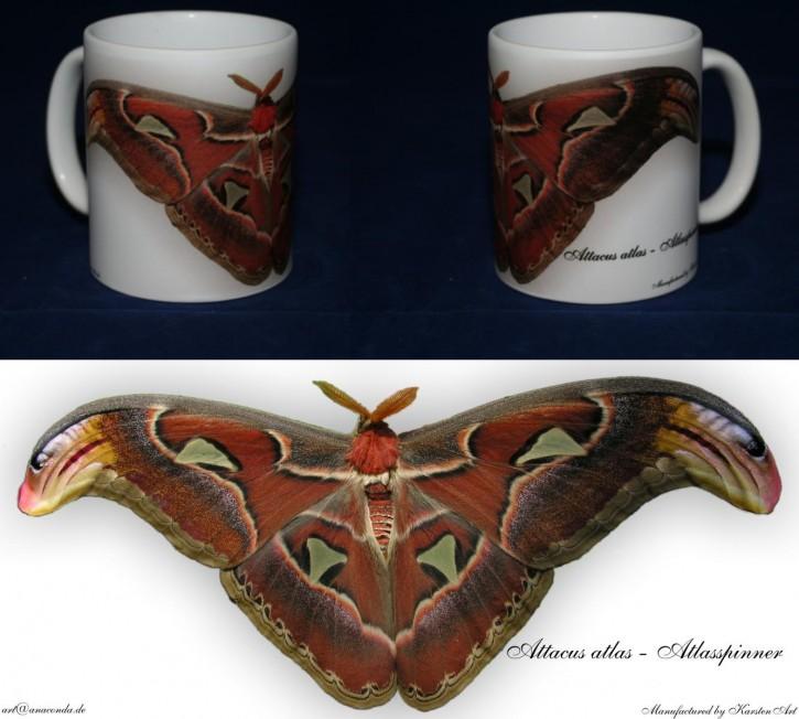 Attacus atlas - Atlasspinner