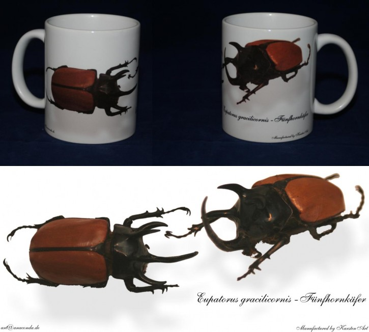 Eupatorus cracilicornis - Fünfhornkäfer Bild auf Fototasse