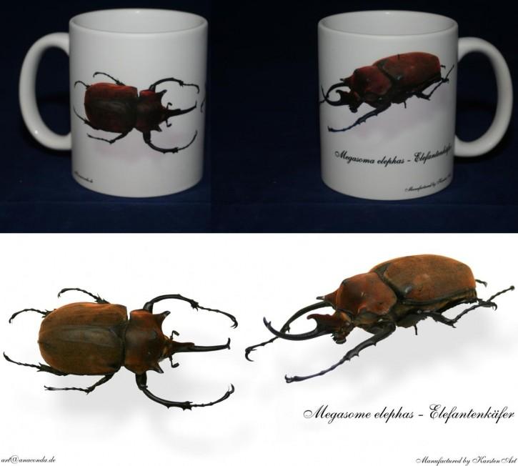 Megasoma elephas - Elefantenkäfer