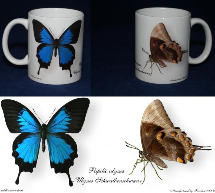 Papilio ulysses - Ulysses Schwalbenschwanz
