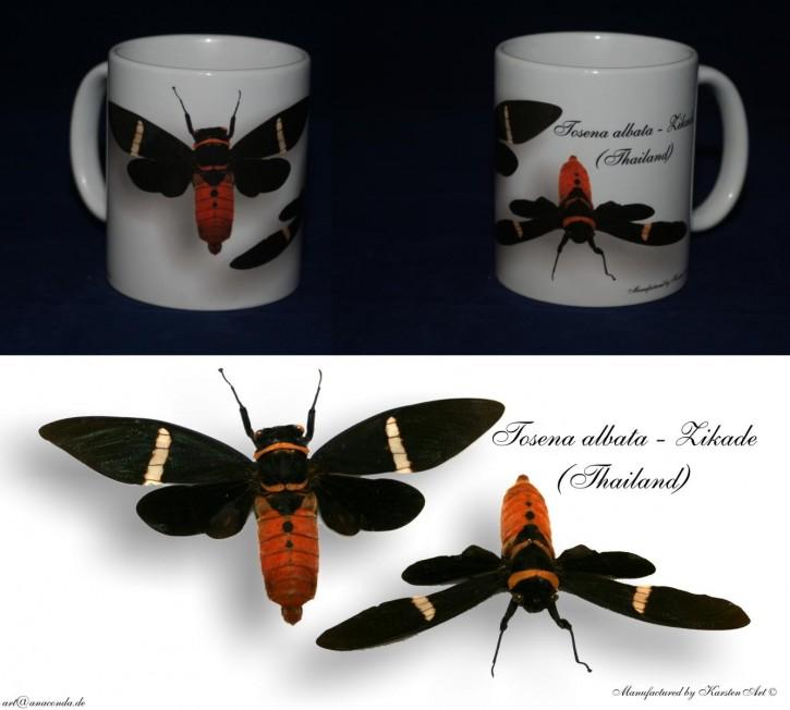 Tosena albata - Zikade